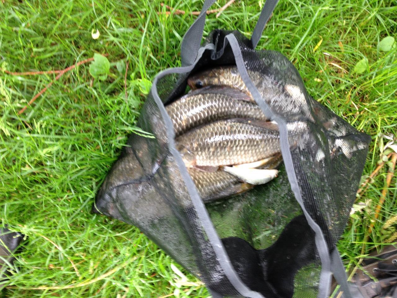 Les poissons dans le filet de pesée