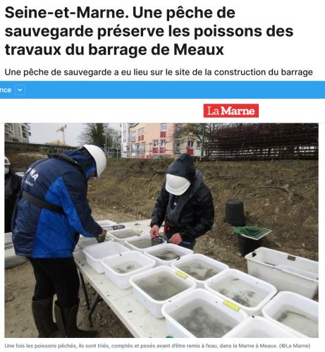 Seine et marne une peche de sauvegarde preserve les poissons des travaux du barrage de meaux